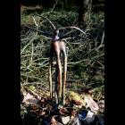 Bronze Sculpture - Centaur IV