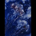 Jelly Fish Monoprints - Jellyfish VII